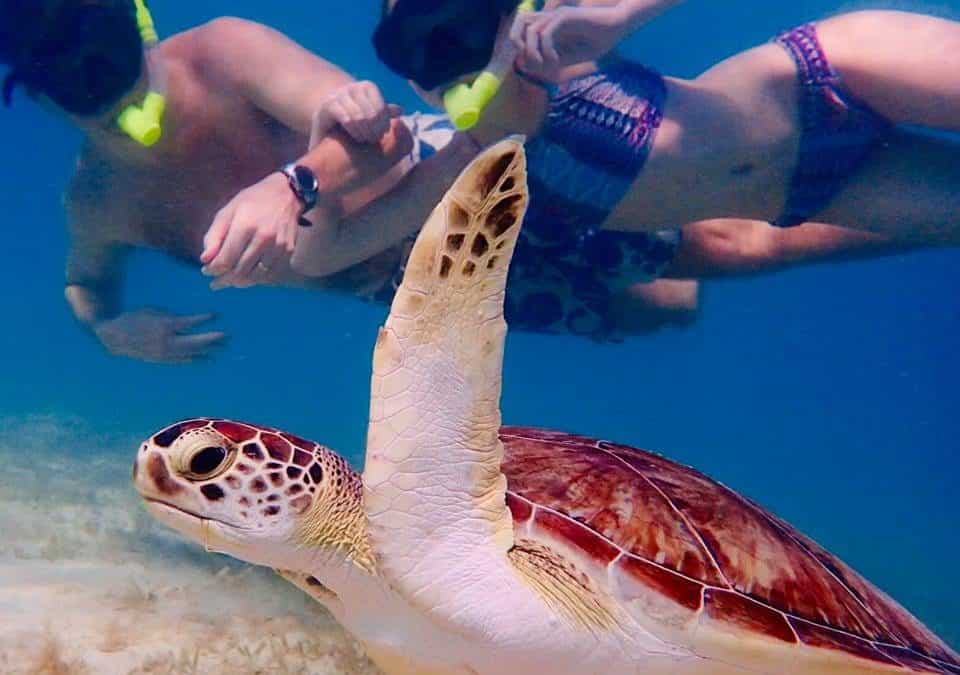 4 Amazing Things You Can See Snorkeling in the Virgin Islands